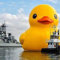 World's Largest Rubber Duck 8/26/2016 12:00:00 AM